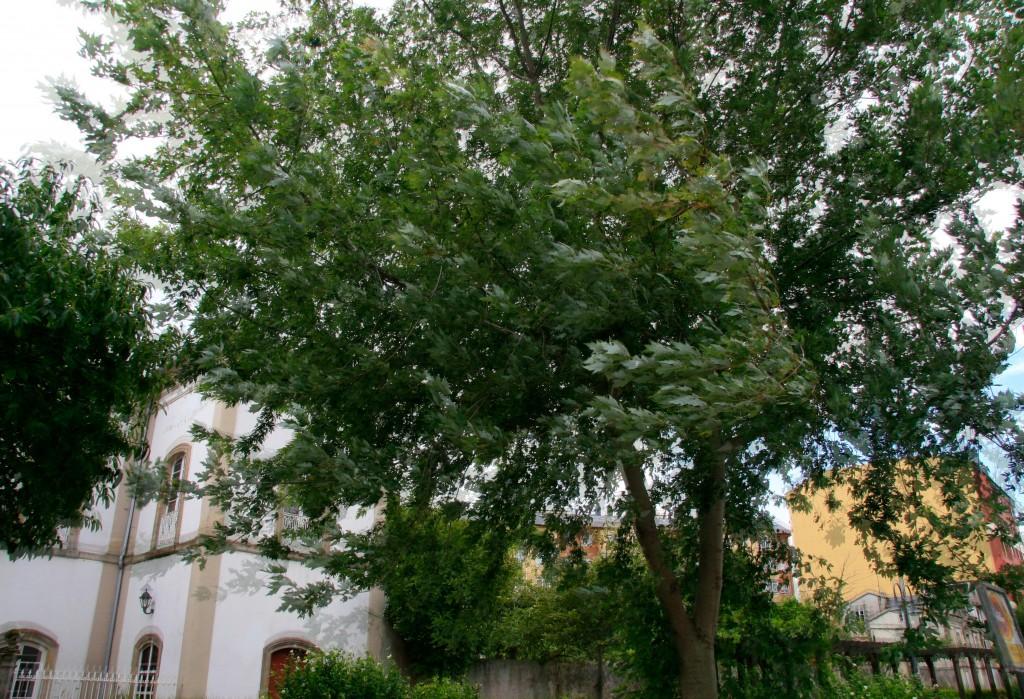 Pegote de barro: Arbol al viento