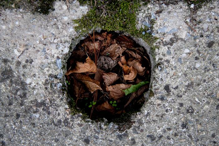 Pegote de barro: hojarasca en agujero en el suelo